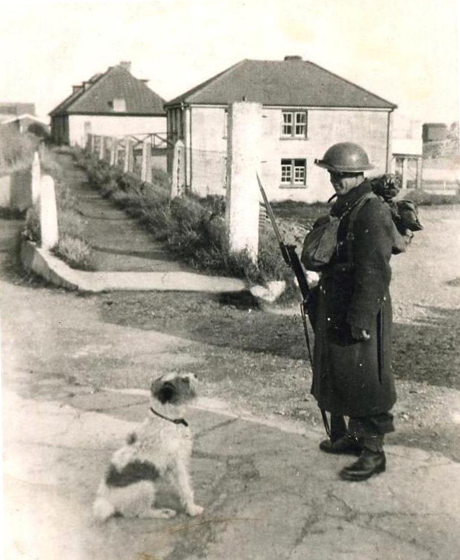 WW2 dog